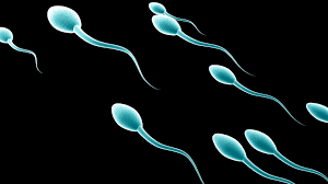 Sperm-of-young-and-well-educated-men-in-demand-on-HWN-SEX-EDU